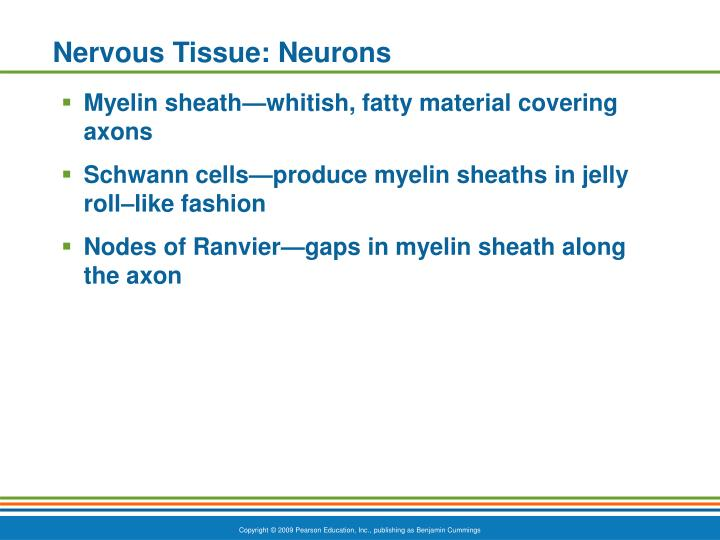Nervous Tissue: Neurons