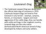 louisiana s dog