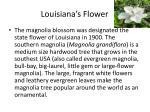 louisiana s flower