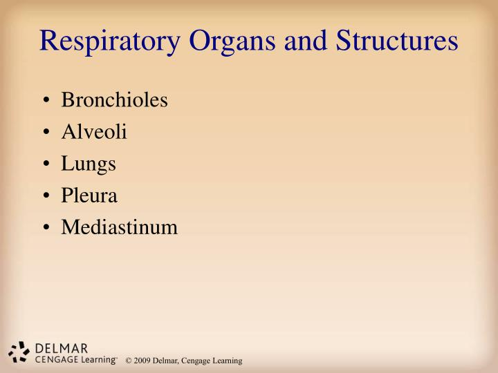 Respiratory Organs and Structures