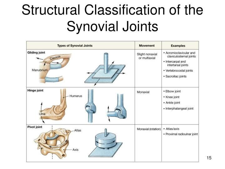 Structural Classification of the Synovial Joints