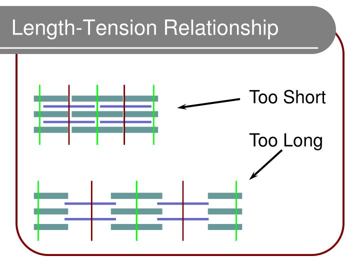 Length-Tension Relationship