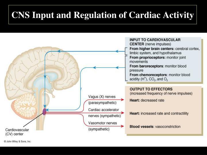 CNS Input and Regulation of Cardiac Activity