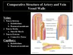 comparative structure of artery and vein vessel walls1