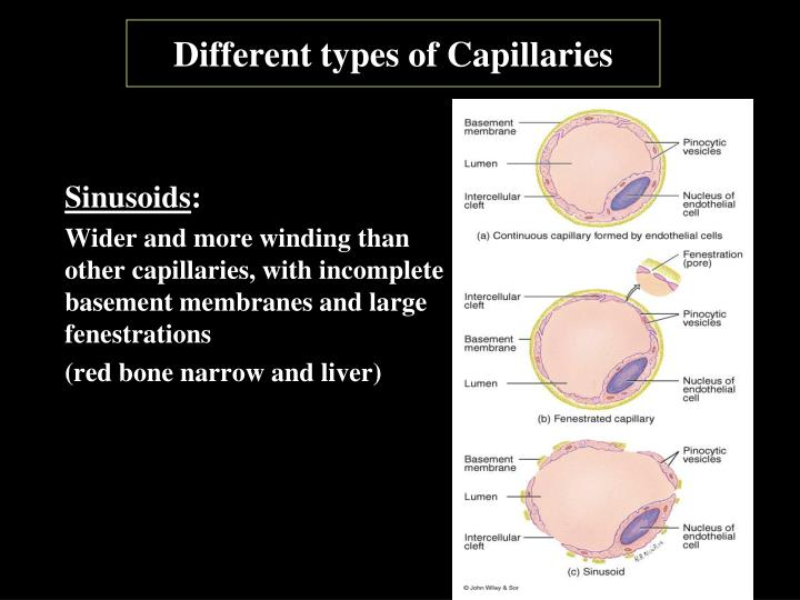 Different types of Capillaries