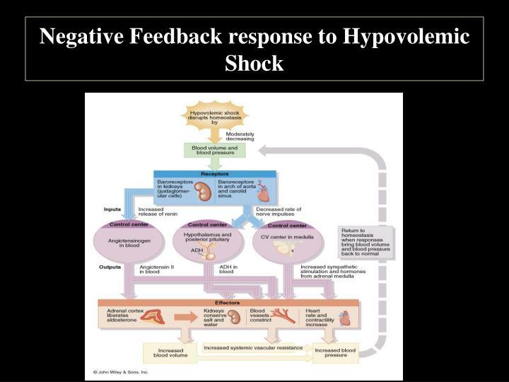 Negative Feedback response to Hypovolemic Shock