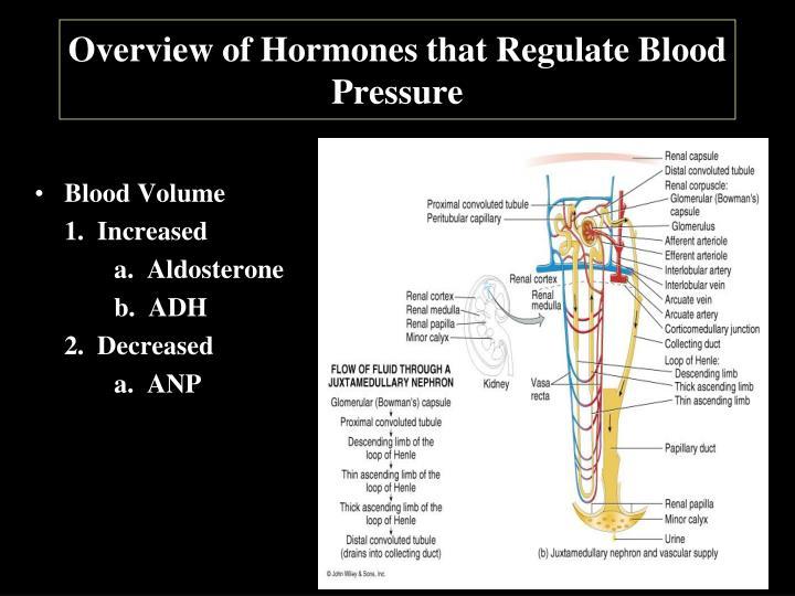 Overview of Hormones that Regulate Blood Pressure