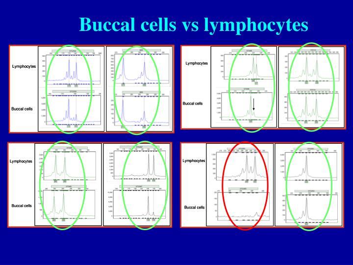 Buccal cells vs lymphocytes