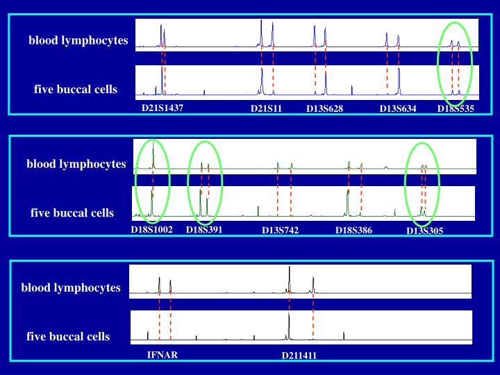 blood lymphocytes