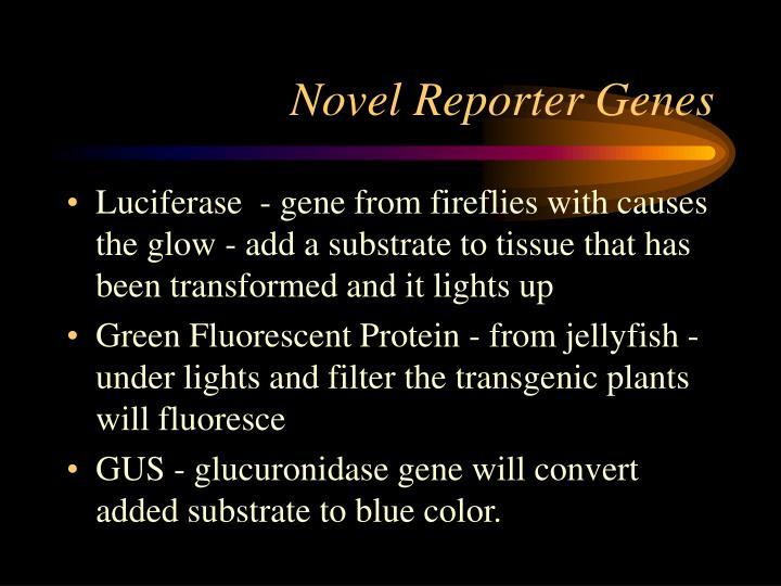 Novel Reporter Genes