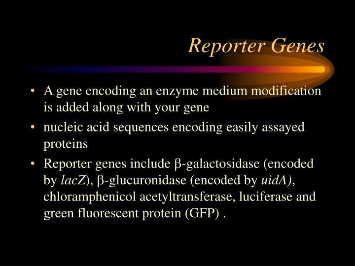 Reporter Genes