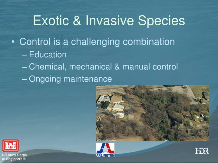 Exotic & Invasive Species