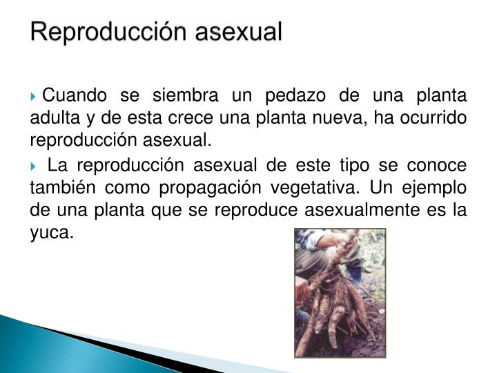 Reproducci n asexual1