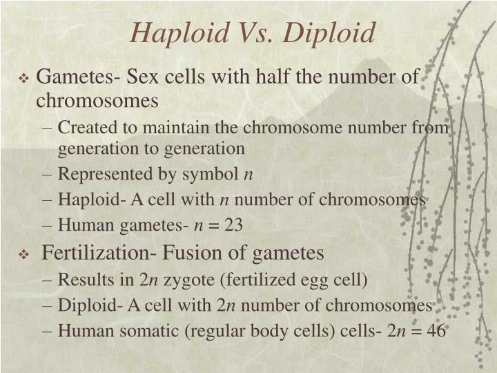 Haploid Vs. Diploid
