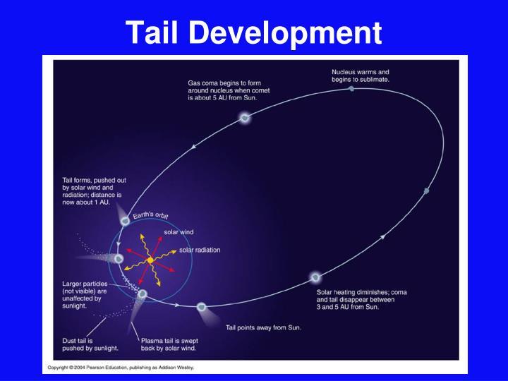 Tail Development