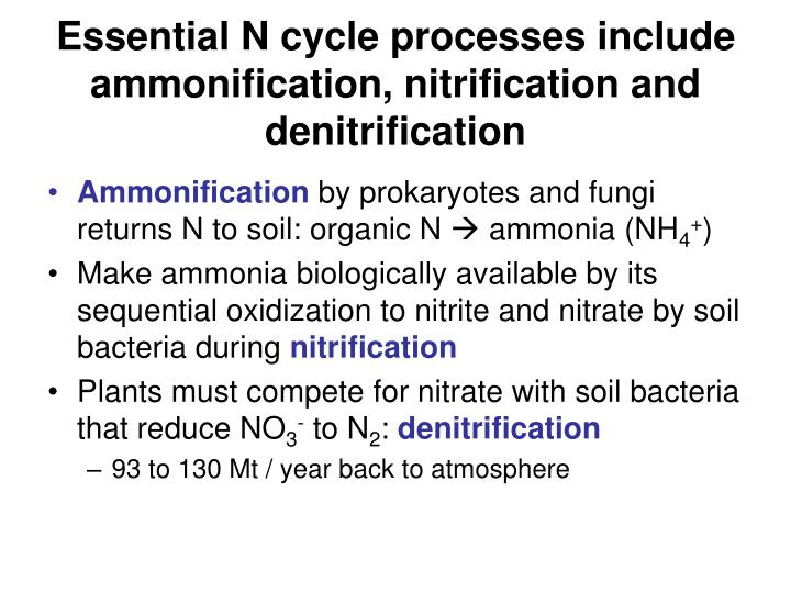 Essential N cycle processes include ammonification, nitrification and denitrification