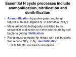 essential n cycle processes include ammonification nitrification and denitrification