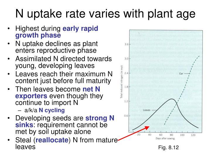 N uptake rate varies with plant age
