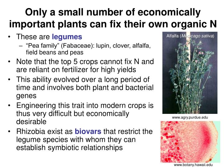 Only a small number of economically important plants can fix their own organic N