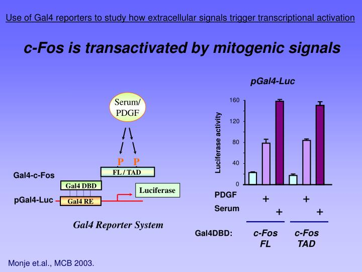 Use of Gal4 reporters to study how extracellular signals trigger transcriptional activation