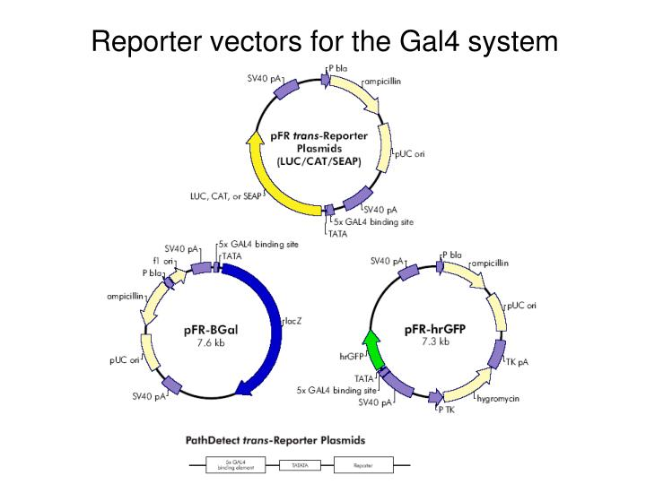Reporter vectors for the Gal4 system
