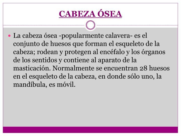 CABEZA ÓSEA