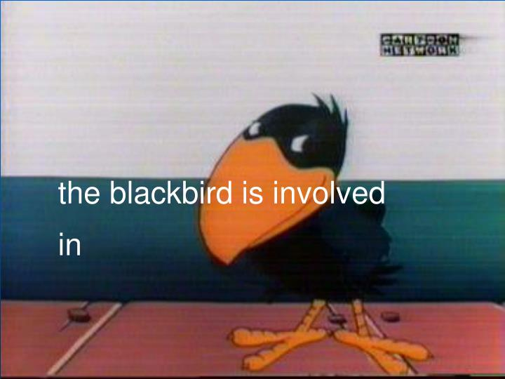 the blackbird is involved