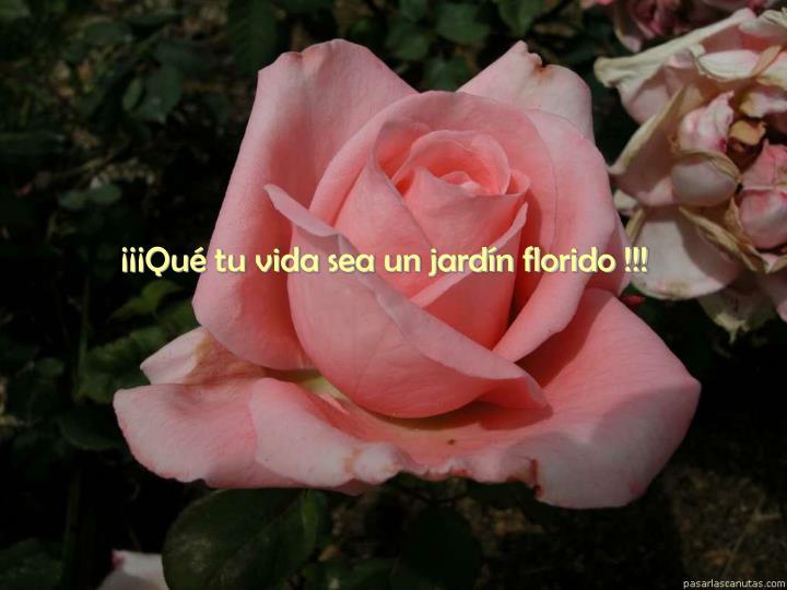 ¡¡¡Qué tu vida sea un jardín florido !!!