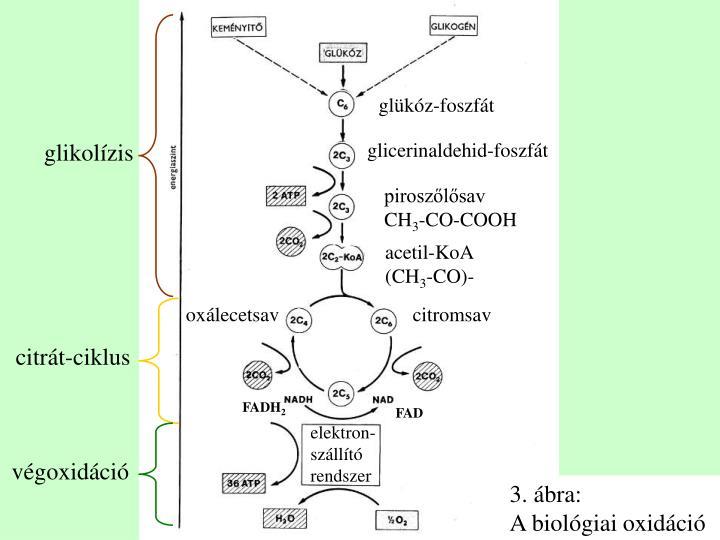 glükóz-foszfát