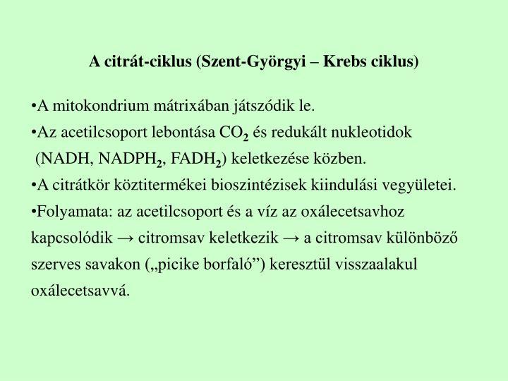 A citrát-ciklus (Szent-Györgyi – Krebs ciklus)