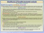clasificarea i func iile esuturilor animale