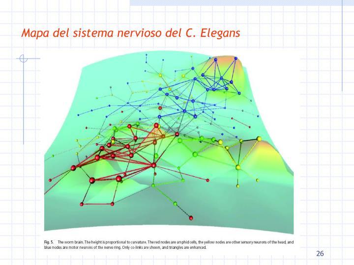 Mapa del sistema nervioso del C. Elegans