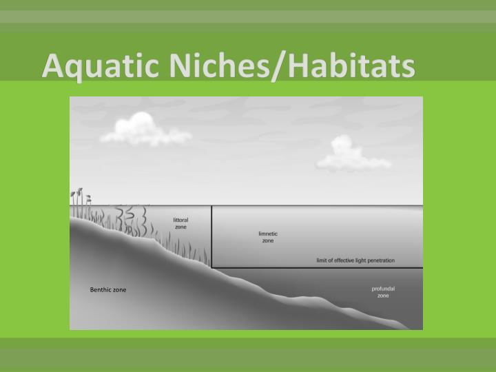 Aquatic Niches/Habitats