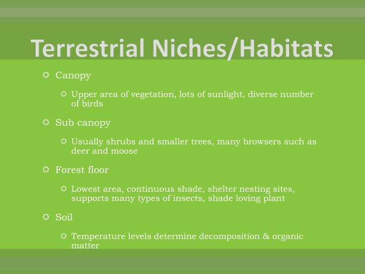 Terrestrial Niches/Habitats