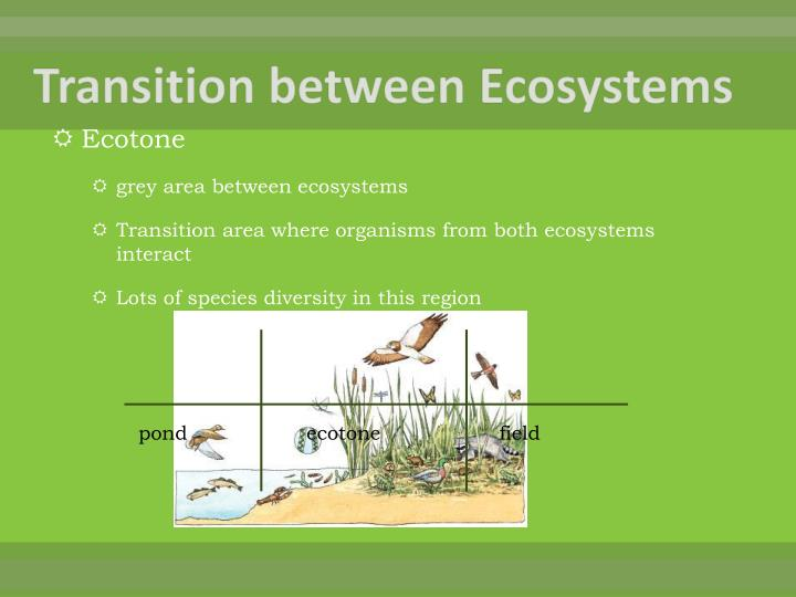Transition between Ecosystems
