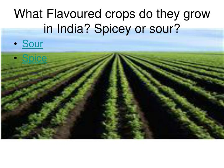 What Flavoured crops do they grow in India? Spicey or sour?