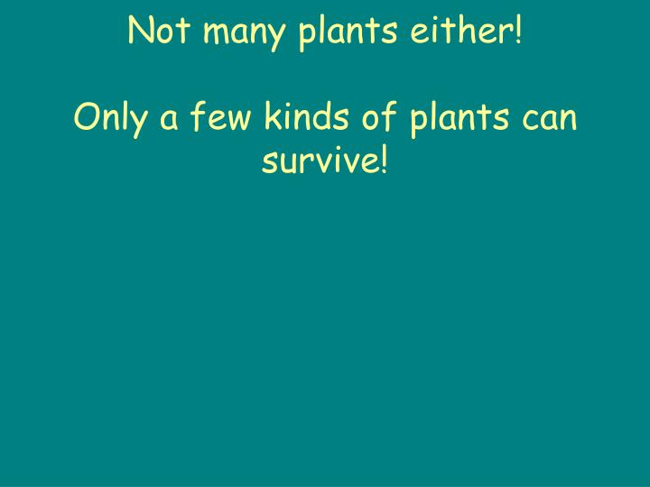 Not many plants either!