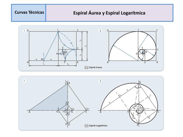 Espiral Áurea y Espiral Logarítmica