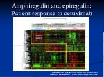 amphiregulin and epiregulin patient response to cetuximab