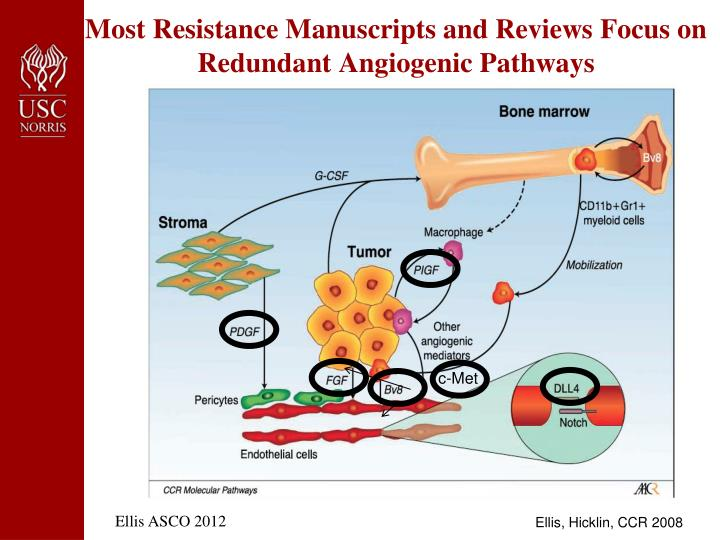 Most Resistance Manuscripts and Reviews Focus on Redundant Angiogenic Pathways