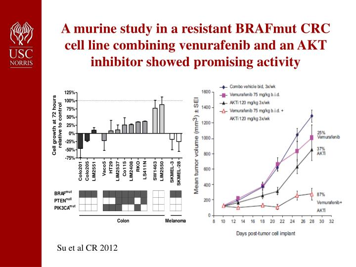 A murine study in a resistant BRAFmut CRC cell line combining venurafenib and an AKT inhibitor showed promising activity