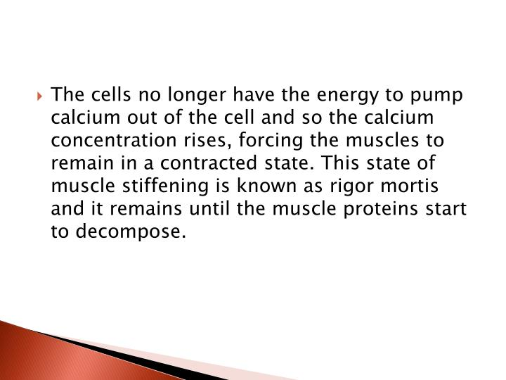 The cells no longer have the energy to pump calcium out of the cell and so the calcium concentration rises, forcing the muscles to remain in a contracted state. This state of muscle stiffening is known as rigor mortis and it remains until the muscle proteins start to decompose.
