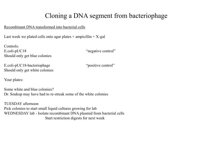 Cloning a DNA segment from bacteriophage
