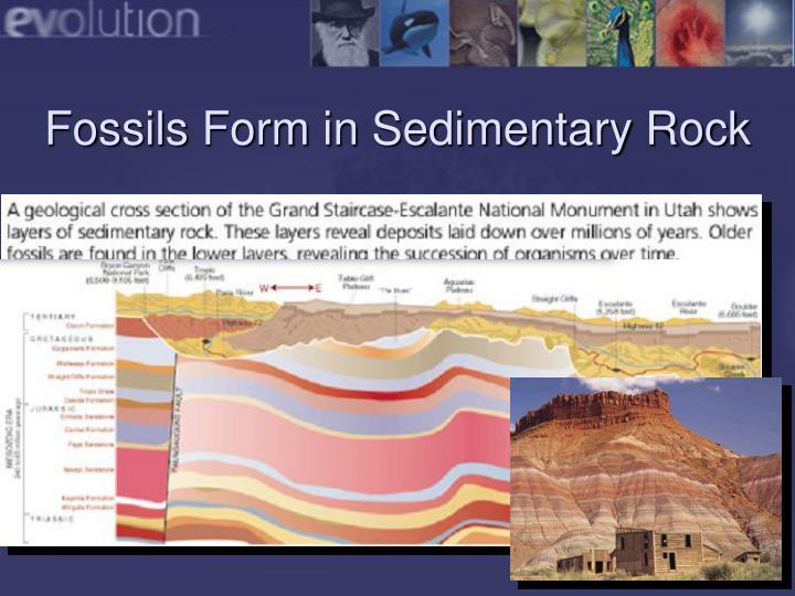 fossil evidence of evolution pdf