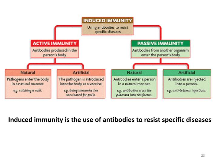 Induced immunity is the use of antibodies to resist specific diseases