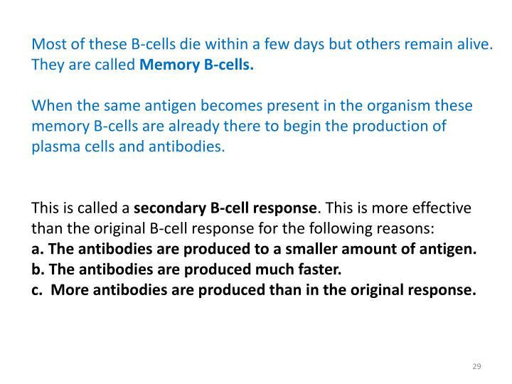 Most of these B-cells die within a few days but others remain alive. They are called