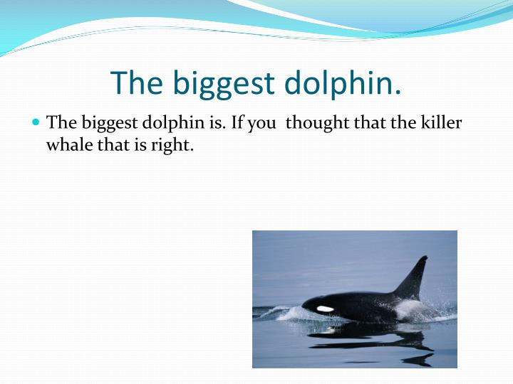 The biggest dolphin.