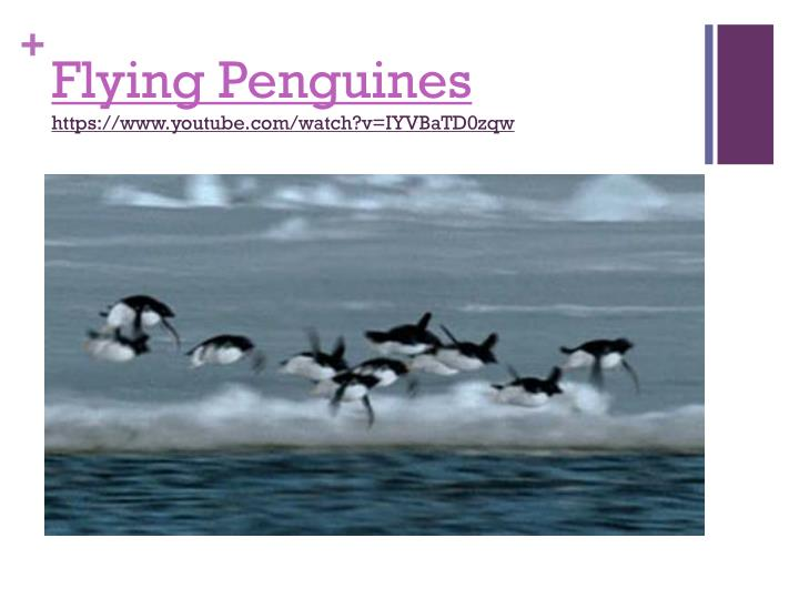 Flying penguines https www youtube com watch v iyvbatd0zqw