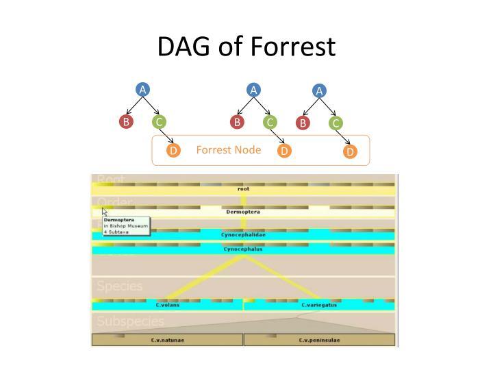 DAG of Forrest