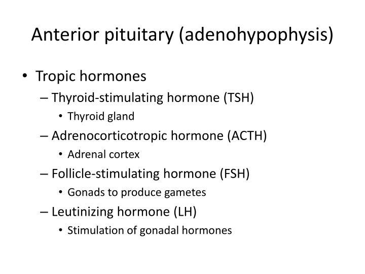 Anterior pituitary (